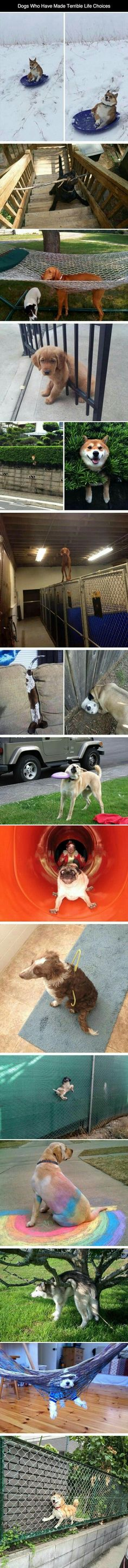Dogs who made terrible life choices.