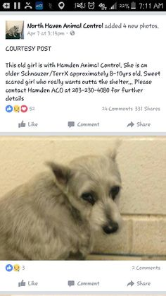 Friends of the Hamden Animal Shelter Page Liked · 3 hrs near Hamden ·   Available at Hamden Animal Control.