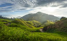 Read How to plan a trip to Malaysia& Cameron Highlands Mexico Vacation, Vacation Places, Vacation Destinations, Vacations, Travel 2017, Asia Travel, Cool Places To Visit, Places To Go, Cameron Highlands