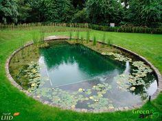 Swimming Pool Pond, Natural Swimming Ponds, Natural Pond, Swimming Pool Designs, Ponds Backyard, Backyard Landscaping, Piscine Diy, Pond Design, Plunge Pool