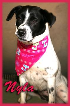 Name: NylaReason for staying at The Pet Connection's home for pets: Nyla came to us from The Humane Society of Greater Kansas City. She is part of the Ray of Hope Program.Heartworm status:Veterinarian examination notes:Special Physical Traits: She...