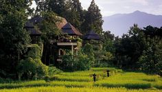 Chiang-Mai & Chiang-Rai in Northern Thailand. Great pair of places to plant yourself for a while. Pictured here, Chiang-Mai. Hotels And Resorts, Best Hotels, Top Hotels, Luxury Hotels, Thailand Tourism, Thailand Travel, Thailand Resorts, Thailand Adventure, Four Season Tent
