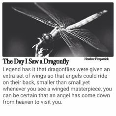 When you see a dragonfly and angel has come from heaven to visit you. Meant To Be Quotes, Life Quotes Love, Family Quotes, Dragonfly Quotes, Dragonfly Tattoo, Dragonfly Symbolism, Dragonfly Art, Dragonfly Meaning Spiritual, Dragonfly Drawing