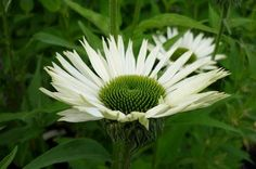 Fahner vaste planten