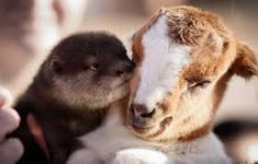 Image result for animal interspecies friendship
