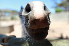 Call me weird, but...Dont know what it is about the horses snouts, but I love them!