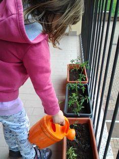 Un orto sul balcone. Attività con i bambini