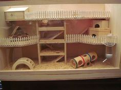 DIY Hamster House Hey Pet Parents and Hamster Lovers. Do you want to build a great hamster house for your hammy, but you do not have the DIY skills to … How To Make A Durable, but Cheap Hamster house READ Dwarf Hamster Cages, Hamster Diy Cage, Gerbil Cages, Hamster Care, Hamster Toys, Hamster Stuff, Diy Gerbil Toys, Robo Hamster, Pet Mice
