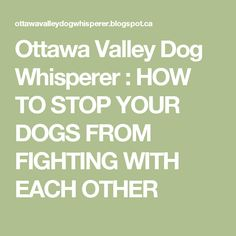 Ottawa Valley Dog Whisperer : HOW TO STOP YOUR DOGS FROM FIGHTING WITH EACH OTHER