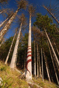 Land Art by Sylvain Meyer. French artist Sylvain Meyer creates beautiful art installations in nature. Art Et Nature, All Nature, Amazing Nature, Land Art, Outdoor Sculpture, Sculpture Art, Outdoor Art, Environmental Sculpture, Art Environnemental