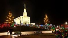 I love the simple yet modern way to light those front pine trees. NZ (New Zeland) Temple Christmas lights Mormon/LDS Christmas Light Displays, Christmas Lights, Hamilton New Zealand, New Zealand Cities, New Year's Eve 2020, Homewood Suites, Temple Pictures, New Year Holidays, Lds Temples