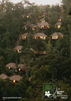 Nandini Bali Jungle Resort & Spa > Ubud > Bali Hotel and Bali Villa Jungle Resort, Resort Spa, Bali Resort, Jungle House, Tropical Architecture, Mountain Resort, Hotels And Resorts, Places To Go, Beautiful Places