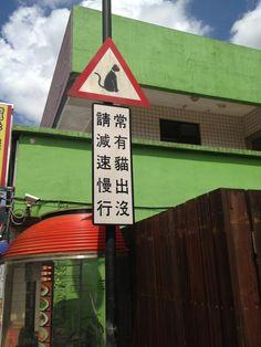 taiwan 猴硐貓村