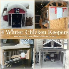 Keeping Chickens in Serious Winter