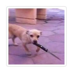 Funny Dog Memes, Funny Animal Memes, Stupid Funny Memes, Funny Relatable Memes, Funny Dogs, Funny Animals, Fuuny Memes, True Memes, Memes Humor