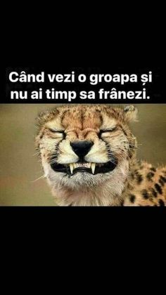 Sarcasm, Haha, Funny Memes, Humor, Animals, Quotes, Chistes, Ouat Funny Memes, Animales