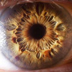 Amazing photos of the human iris and eye!