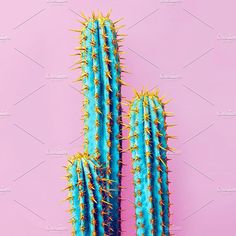 Cactus. Minimal creative stillife by Porechenskaya on @creativemarket