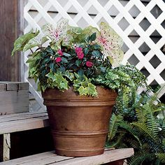 Ivy, Ferns, Impatiens & Caladiums    Update your standard plastic planter. A gel stain was applied to this pot for a richer finish.