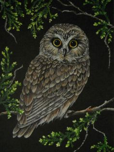 Saw-Whet Owl bird wildlife landscape print | eBay