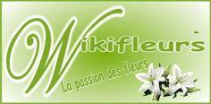 Logo Wikifleurs