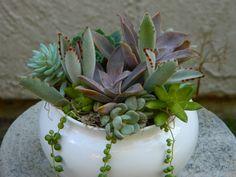 Succulent  Centerpiece Succulent Garden Succulent