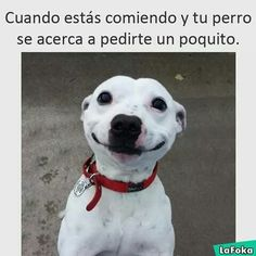 """#wattpad #de-todo Acá encontrarás cosas Tipicas que hemos hecho en la vida o de Las Personas.Espero que te guste este Zukukisthozo Libro :v.Me gustó Mi descripción Corta y Simple,ewe. [Terminado] """"Cosas Típicas de Las Personas 2"""" ya esta en el Perfil Publicado øBlurryFaceø Funny Animal Jokes, Animal Memes, Funny Dogs, Funny Animals, Cute Animals, Funny Spanish Memes, Spanish Humor, Funny Quotes, Funny Memes"""