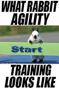 What rabbit agility training looks like! (plus a Rocky tribute)