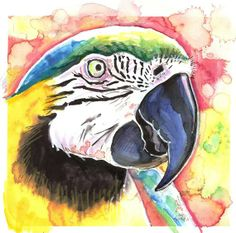 Macaw Parrot Artist Signed Watercolor Print by CanyonWrensNest, $12.99