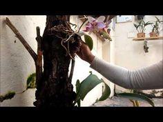 Preparação para plantar Orquídeas no quintal, galhos, madeiras o que usar ,qualidade de vida - YouTube