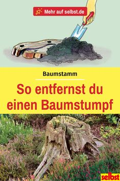 Removing tree stump - Instructions- Baumstumpf entfernen – Anleitung One trunk velvet and removing is a lot of work. We'll show you one Alternative that at the same time - Easy Garden, Summer Garden, Irrigation, Removing Tree Stumps, Plane Tree, Garden Sprinklers, Room With Plants, Square Foot Gardening, Backyard Fences