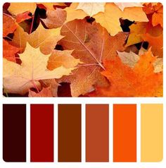 Decorating with autumn colours  http://alphabetlifestyle.com/2015/11/01/decorating-with-autumn-colours/
