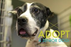 Their affection is timeless, their devotion is ageless and their love is forever! ADOPT a Senior Dog TODAY!