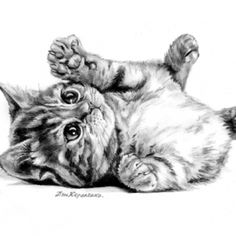 art, cat, drawing, illustration - painting with pencils and chalk, charcoal - # . Animal Sketches, Animal Drawings, Pencil Drawings, Art Sketches, Art And Illustration, Simple Cat Drawing, Drawing Ideas, Kitten Drawing, Charcoal Art