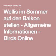 Wellis im Sommer auf den Balkon stellen - Allgemeine Informationen - Birds Online