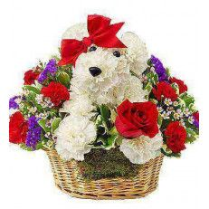 Love Pup Exclusive give them a case of puppy love with our very own love pup. Crafted from bright white carnations, our canine cutie arrives in a charming dog bed basket, holding a single red rose. Whether you're looking to spark a romance or surprise friend #Valentine day #USA
