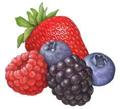Fruit illustration of berries including strawberry, blueberry, blackberry and raspberry. Fruits Drawing, Food Drawing, Cool Art Drawings, Realistic Drawings, Strawberry Art, Raspberry Fruit, Art Painting Gallery, Fruit Illustration, Simple Cartoon