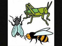 Los insectos - Documental para Niños - YouTube