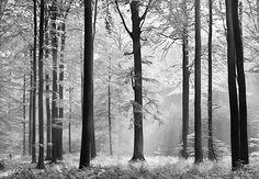 Fotobehang Avalon - Bomen behang   Muurmode.nl