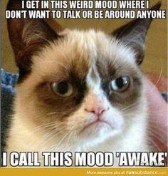 Grumpy Cat Quotes, Gato Grumpy, Funny Grumpy Cat Memes, Funny Cats, Funny Animals, Funny Memes, Grumpy Kitty, Grump Cat, Funny Quotes