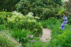 Agapanthus, Searsia, Irises, Erigeron and Rosemary lining this gravel pathway designed by Photography: Mike Hall. Landscape Structure, Landscape Design, Garden Design, Big Plants, Tall Plants, Landscaping Tips, Front Yard Landscaping, Garden Borders, Garden Paths