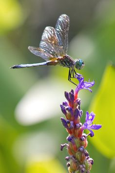 Flower Perch, cheryl.rose83 #Dragonfly