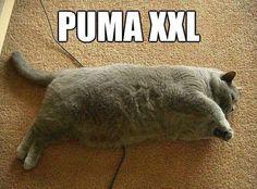 puma XXL;P