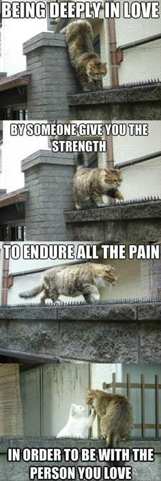 Lustige Tiere Picdump des Tages 187 Foto's) # Foto's # Witze - Animals and pets - Süße Funny Animal Memes, Funny Animal Pictures, Cute Funny Animals, Cat Memes, Cute Baby Animals, Funny Cute, Animals And Pets, Cute Cats, Funny Memes