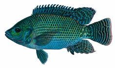 """Backyard fish farming is a lot like vegetable gardening. Feed family and friends year-round from a sustainable source of food. Originally published as """"Fish Farming"""" in the April/May 2006 issue of MOTHER EARTH NEWS.data-pin-do="""