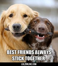 Best Friends Always Stick Together #lol #haha #funny