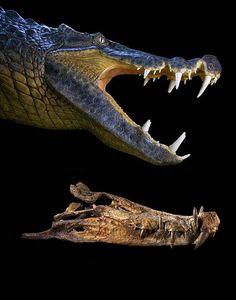 dinosaur skull reconstruction - Google Search