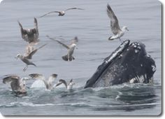 Cape Cod Whale Watching, Dolphin Fleet of Provincetown MA, Best in New England