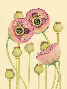 Poppies Pods