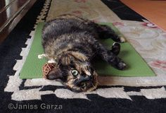 Cats love your yoga mat. Maybe they deserve their own.